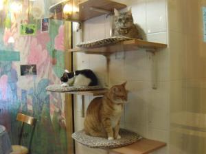 Cat Cafe 002