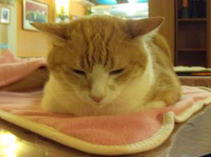 Cat Cafe 009