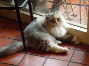Cat Cafe 040