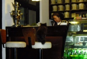 cat at the bar